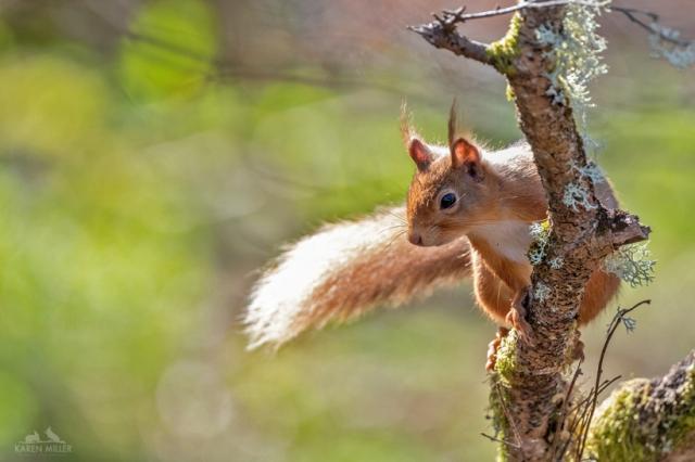 squirrelhide_21april2020-8505984-2