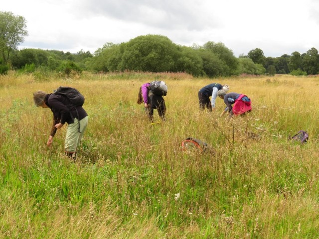 Volunteers previously harvesting yellow rattle seed at Burleigh meadow