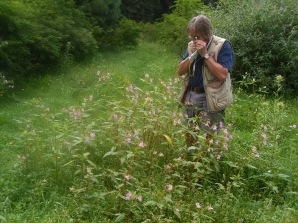 Surveying for fungus in native range, (C)CABI