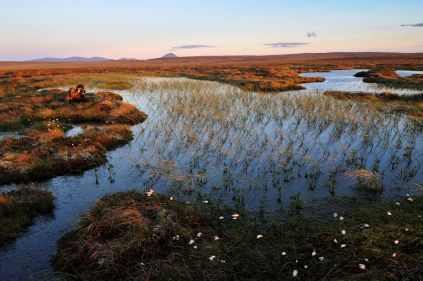 Peat bog at Forsinard Flows ©Lorne Gill/NatureScot/2020VISION