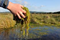 Sphagnum moss. ©Lorne Gill/SNH